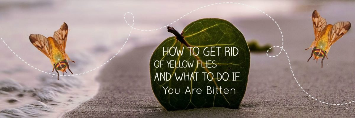 How To Get Rid Of Yellow Flies & What To Do When Bitten