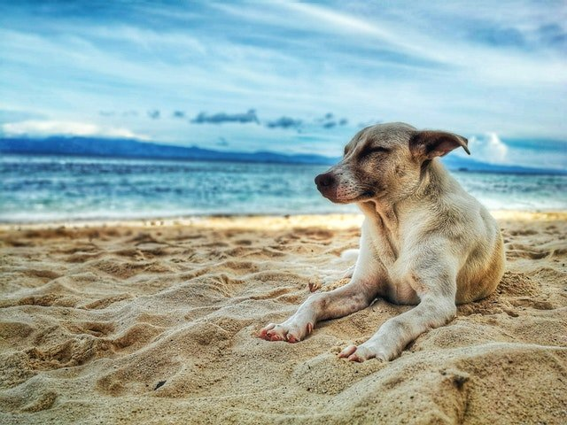 Pensacola Florida Dog Park Guide, Dog Laying In The Sand