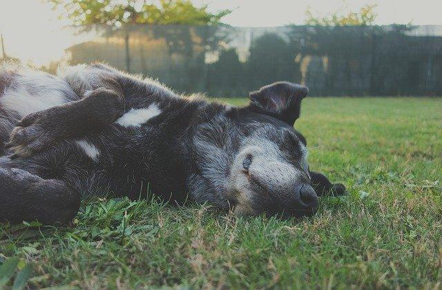 Pensacola Florida Dog Park Guide, Dog Sleeping