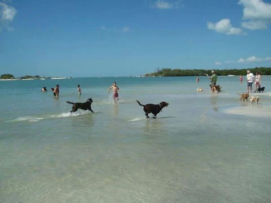 Pensacola Florida Dog Park Guide, Dogs Playing In The Water
