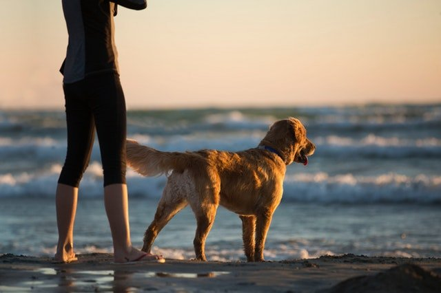 Pensacola Florida Dog Park Guide, Dog And Owner Looking Into Water