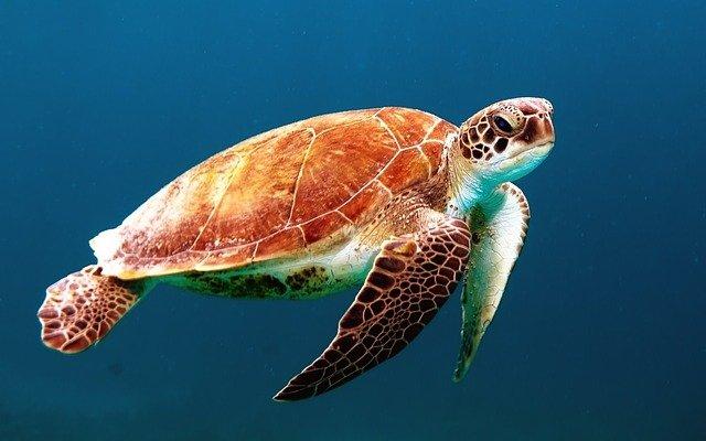 Pensacola Florida, Learn About The Ocean