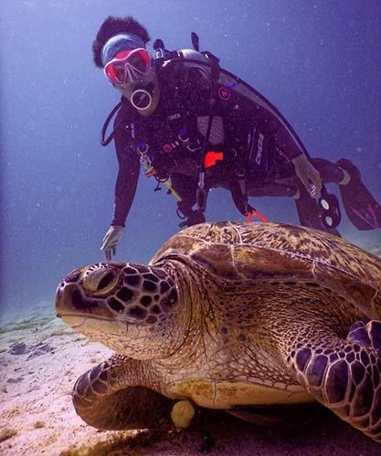 Pensacola Florida Scuva Diving Guide, Scuba Diver With Turtle